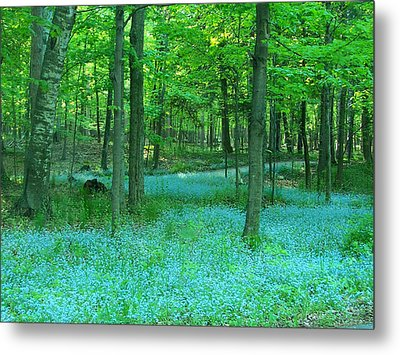 Forget-me-nots In Peninsula State Park Metal Print by David T Wilkinson