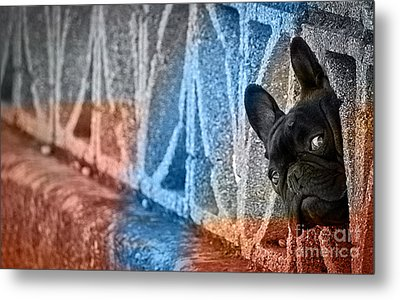 French Bulldog  Metal Print by Marvin Blaine