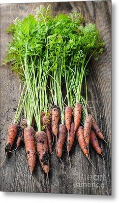 Fresh Carrots From Garden Metal Print by Elena Elisseeva