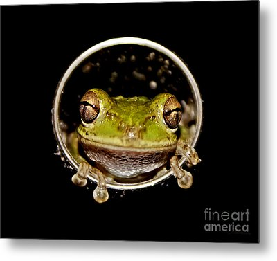 Metal Print featuring the photograph Frog by Olga Hamilton