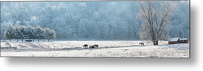 Frosty Morning Metal Print by Bill Wakeley