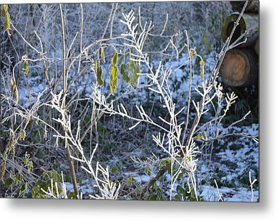 Metal Print featuring the photograph Frozen by Felicia Tica
