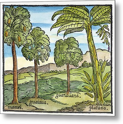 Fruit Trees Of Hispaniola Metal Print