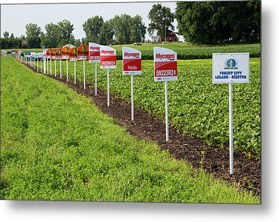 Genetically Modified Crop Signs Metal Print by Jim West