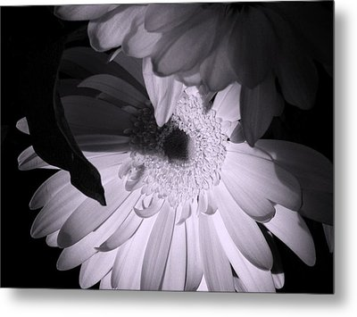 'gerber Poetry' Metal Print