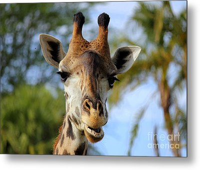 Metal Print featuring the photograph Giraffe by Lisa L Silva