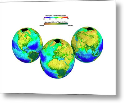 Global Chlorophyll Distribution Metal Print by Carlos Clarivan