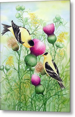 Gold Finches On Thistles Metal Print