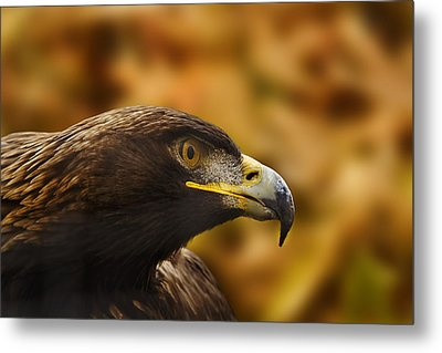Metal Print featuring the photograph Golden Eagle  by Brian Cross