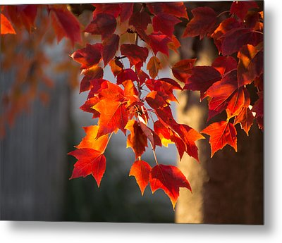 Golden Hour Metal Print by Cathy Donohoue