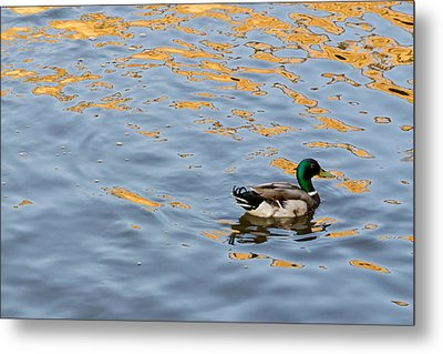 Metal Print featuring the photograph Golden Ripples by Keith Armstrong