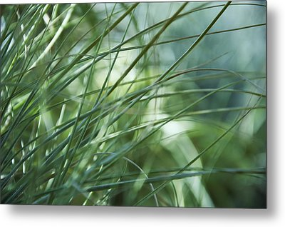 Grass Abstract Metal Print by Sabina  Horvat