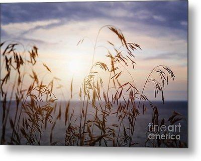 Grass At Sunset Metal Print