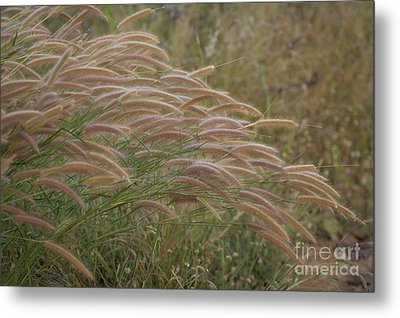 Grass Together In A Group Metal Print