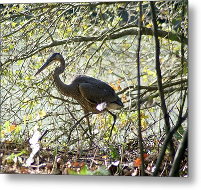 Metal Print featuring the photograph Great Blue Heron In Bushes by Karen Silvestri