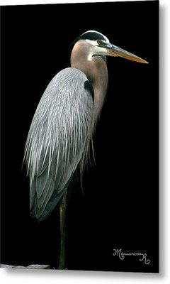 Metal Print featuring the photograph Great Blue Heron by Mariarosa Rockefeller
