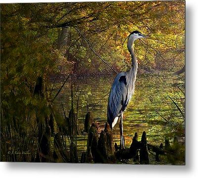 Great Blue Heron Wading Metal Print by J Larry Walker