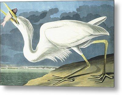 Great White Heron Metal Print by John James Audubon