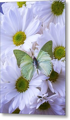 Green Butterfly  Metal Print by Garry Gay