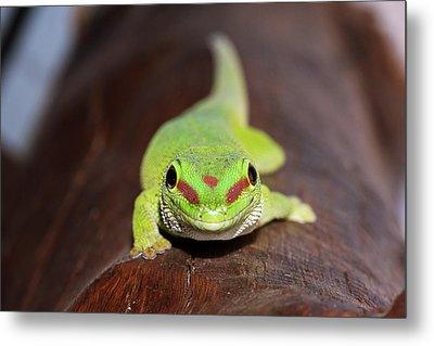 Green Day Gecko Metal Print
