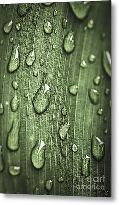 Green Leaf Abstract With Raindrops Metal Print