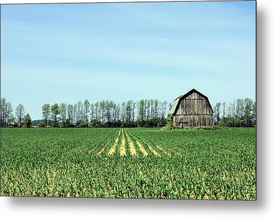 Green Metal Print by Sheryl Burns