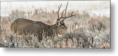 Greeting A Frosty Dawn Metal Print by Yeates Photography