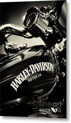 Harley D Sepia Metal Print by Tim Gainey