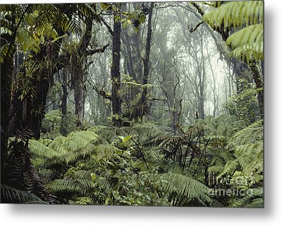 Hawaiian Rainforest Metal Print by Gregory G. Dimijian, M.D.
