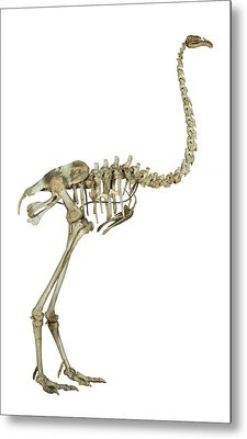 Heavy-footed Moa Metal Print by Natural History Museum, London