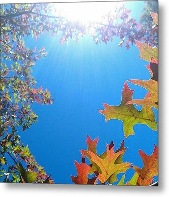 Hello Autumn Metal Print by CML Brown