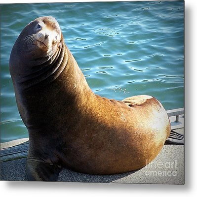 Hello Metal Print by Chalet Roome-Rigdon