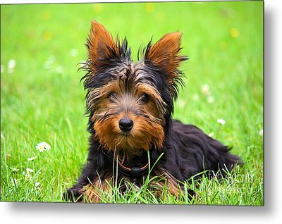 Hello Toby Metal Print by Angela Doelling AD DESIGN Photo and PhotoArt