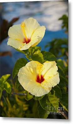 Metal Print featuring the photograph Bright Yellow Hibiscus by Roselynne Broussard