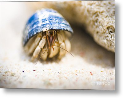 Hiding Hermit Crab Metal Print by Jorgo Photography - Wall Art Gallery