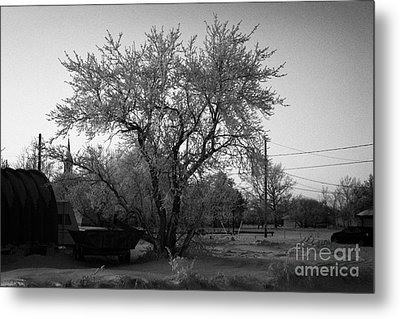 hoar frost covered trees on street in small rural village of Forget Saskatchewan Canada Metal Print by Joe Fox