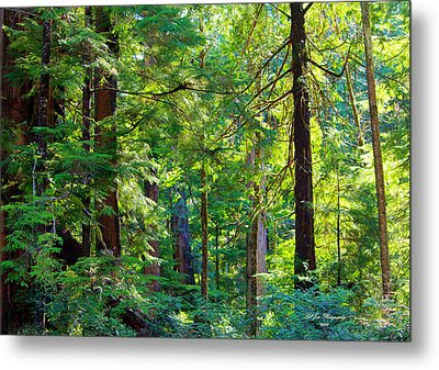 Hoh Rain Forest Metal Print by Jeanette C Landstrom