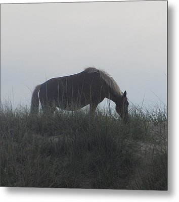 Horses Of Corolla 5 Metal Print by Cathy Lindsey