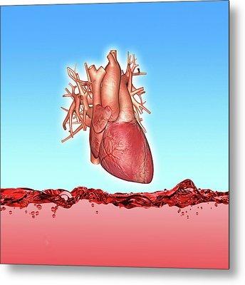 Human Heart Metal Print by Alfred Pasieka