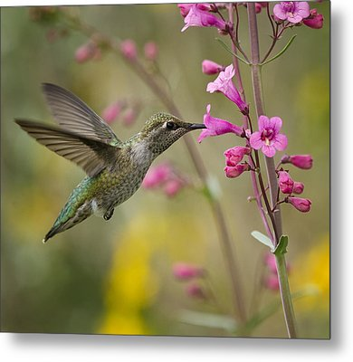 Hummingbird Heaven  Metal Print by Saija  Lehtonen