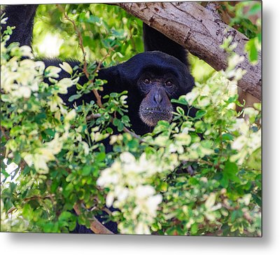 Metal Print featuring the photograph I See You by John Johnson
