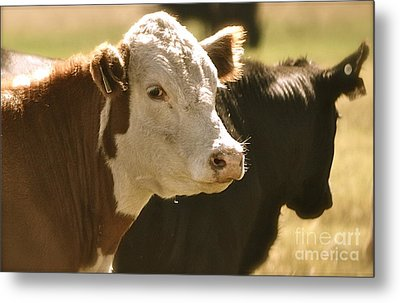 Metal Print featuring the photograph I'm Watching You by Barbara Dudley