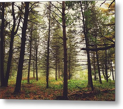Into The Forest Metal Print by Nikki McInnes
