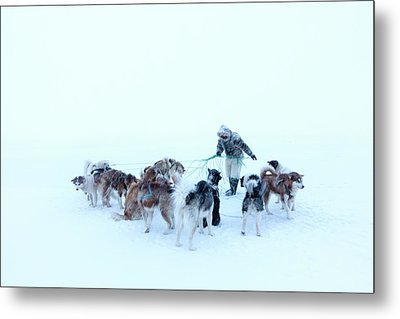 Inuit Hunter And Husky Dog Team Metal Print by Louise Murray