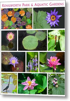 Kenilworth Aquatic Gardens Metal Print