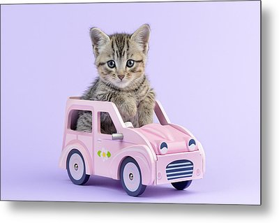 Kitten In Pink Car Metal Print by Greg Cuddiford