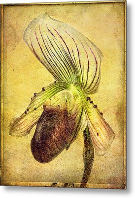 Lady Slipper Orchid Metal Print by Robert Jensen