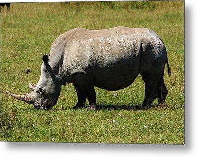 Lake Nakuru White Rhinoceros Metal Print by Aidan Moran