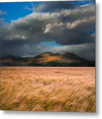 Landscape Of Windy Wheat Field In Front Of Mountain Range With D Metal Print by Matthew Gibson