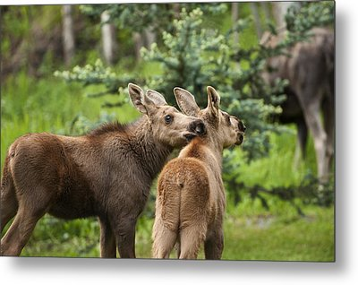 Lean On Me Metal Print by Ted Raynor